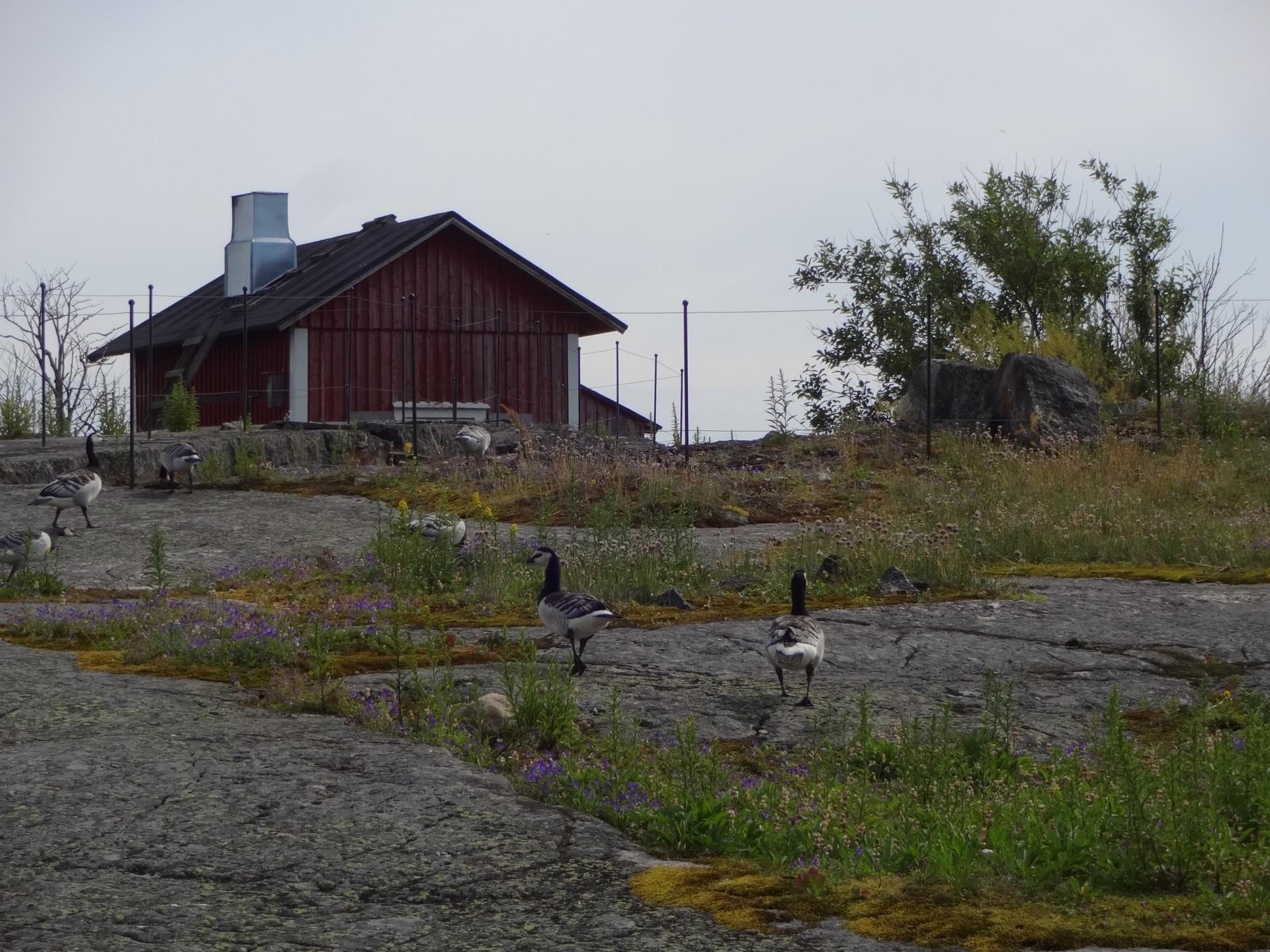 Söderskärillä on runsas linnusto. Saaren kallioilla tepastelee mm. valkoposkihanhia. Luotsluodolla BirdLifen tutkijat tarkkailevat saaren lintukantaa.