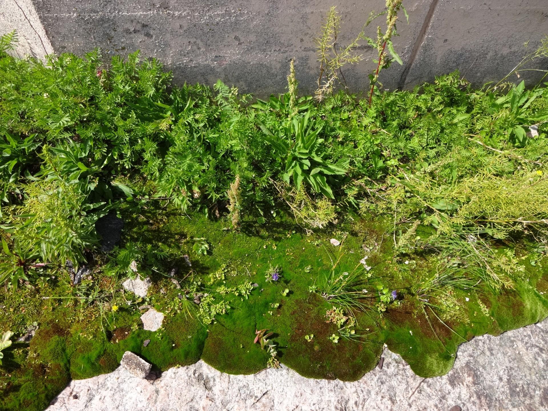 Kasvillisuus saarella on varsin vähäistä.  Pienillä maatilkuilla kasvavat vain sitkeimmät kukat ja sammaleet.