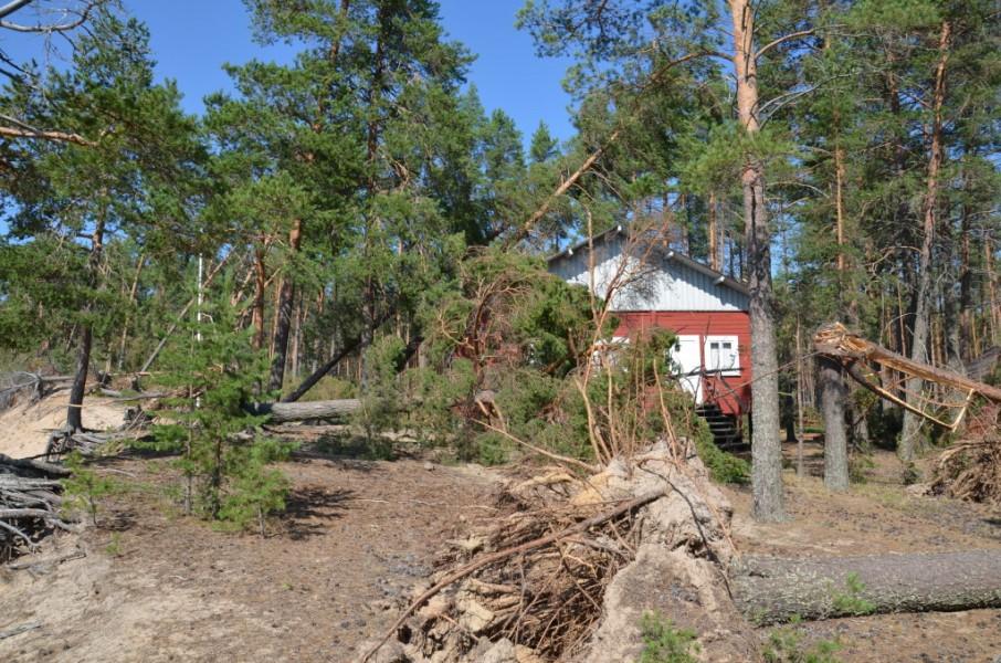 Leirimaja kaatuneiden puiden keskellä