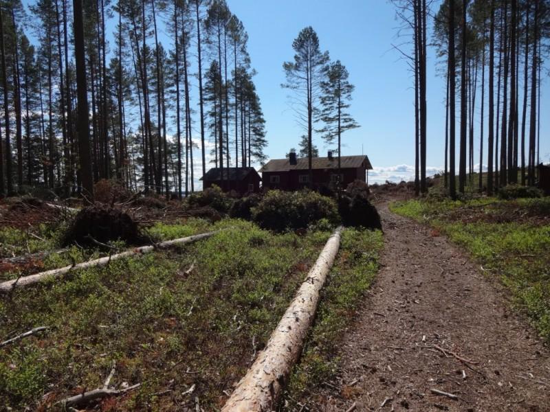 Leirimajan takana sijaitseva polku, jonka varrelta metsää kaatui kosolti.