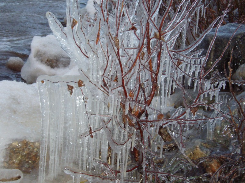 Rantamien pajukot saivat myrskyn jälkeen jääkuorutuksen.